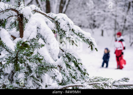 Branches of forest coniferous tree covered with snow, unrecognizable young mother with child in snowy park, winter leisure, active lifestyles. Natural background - Stock Photo