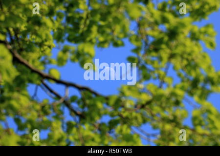 Vew on a bright day moon between tree branches Background: blue sky and the moon - Stock Photo