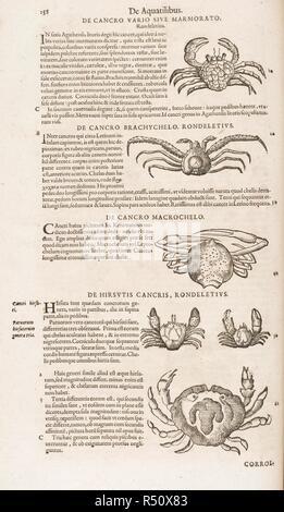Crabs. C. Gesneri ... historiæ insectorum libellus. 1620 -. Crabs. Image taken from: C. Gesneri ... historiæ insectorum libellus, qui est de scorpione. Per C. Wolphium ... collectus, etc. . Source: 460.c.6, page 114. Language: Latin. Stock Photo