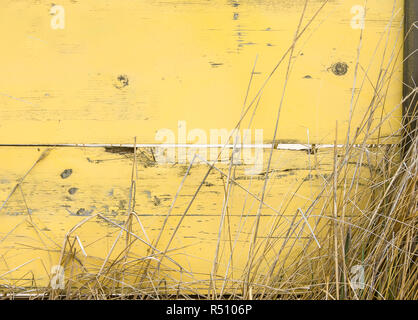 beach grass growing in front of weathered yellow painted wall