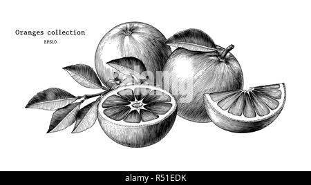 Oranges collection hand draw vintage clip art isolated on white background - Stock Photo