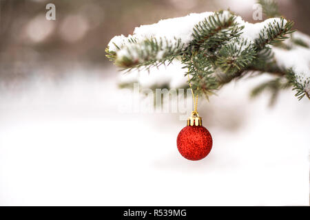 Christmas red ball hanging on fir-tree outdoor. - Stock Photo