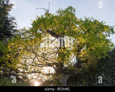 the sun poking through an oak tree outside on edge of country with plenty of serene beauty - Stock Photo