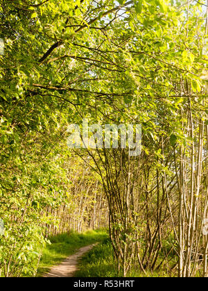 stunning lush trees inside a forest in nature with no people around and peaceful - Stock Photo
