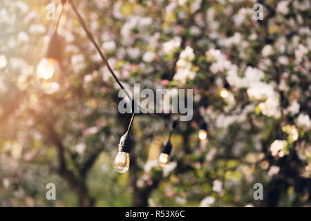 outdoor party string lights hanging in backyard garden - Stock Photo