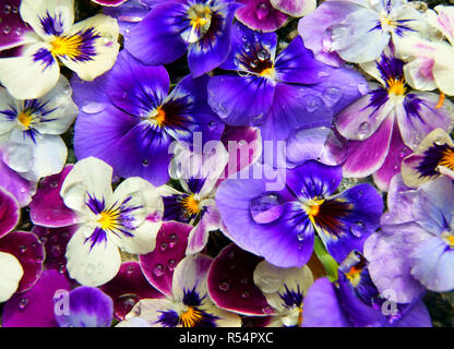 Much flowers - Stock Photo