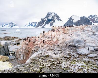 Chicks and adult Adelie penguins, Pygoscelis adeliae, and Antarctic shags on Petermann Island, Antarctic Peninsula, Antarctica - Stock Photo
