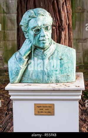 Bust of Sir Jagadis Chandra Bose at Christ's College, Cambridge.  By Biman Bihari Das. - Stock Photo
