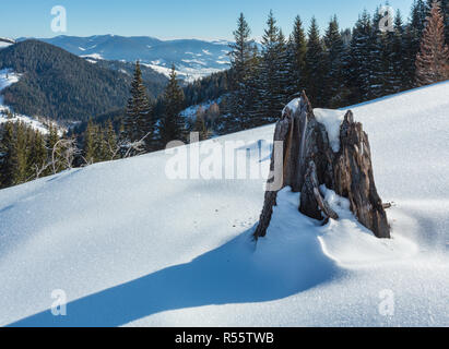 Winter  morning picturesque mountain hill  snow covered and some withered windbreak trees and stump (Ukraine, Carpathian Mountains, tranquility peacef - Stock Photo