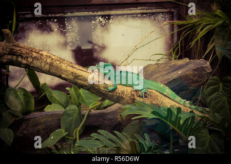 Green lizard on a branch - Stock Photo