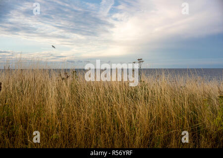 A view from the steep coast on the Baltic Sea in Schleswig-Holstein, Germany 2018. - Stock Photo
