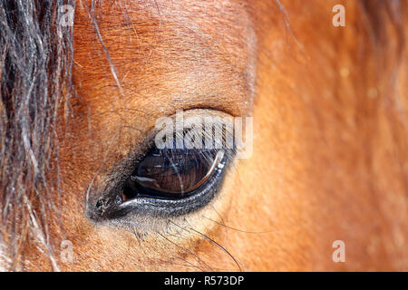 close-up of the eye of a horse - Stock Photo