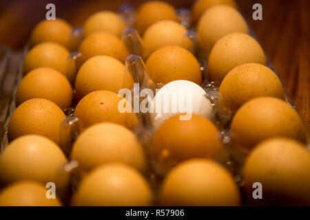 A single white egg in a carton of brown eggs on a table top - Stock Photo