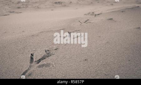 Bird footprints on sand beach