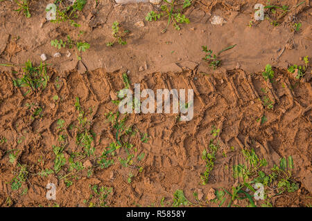 Texture of wet brown mud with car tyre tracks and shoe footprint - Stock Photo