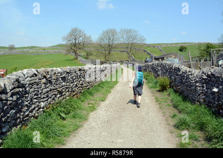 A young female hiker walks along a footpath between stone walls through farmland on the Yorkshire Dales Way, Northern England, United Kingdom. - Stock Photo
