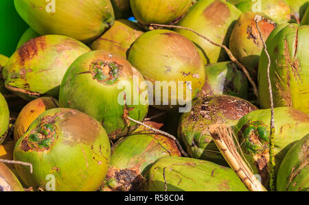 Pile of fresh green ripe coconuts ready to be cracked open for coconut water in the Bahamas - Stock Photo