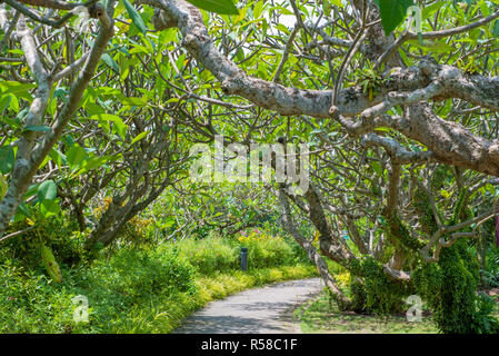 Pathway and Tree with sun light in public park - Stock Photo