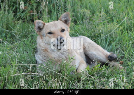 Abandoned shaggy dog sits on the street outdoor - Stock Photo