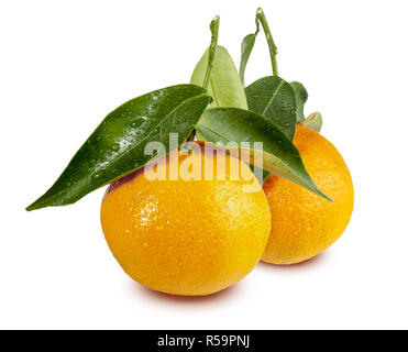 Two (2) tangerines freshly picked with leaves and drops of water. Isolated on white background. (Clementinas, Clemenvillas, Satsuma, Octubrina) - Stock Photo