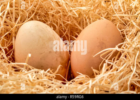 Close up shot of a couple of Eggs in a straw nest - Stock Photo