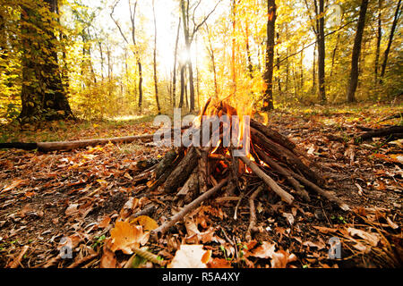 The bonfire burn in the autumn forest. - Stock Photo