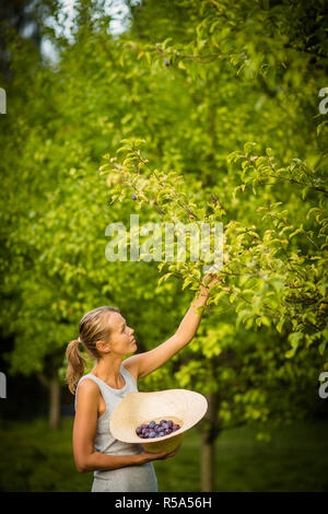 Pretty, young woman gardening in her garden, cutting branches, taking care of the fruit trees in her lovely orchard - Stock Photo