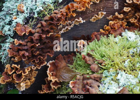 Different variety of wild mushrooms and moss growing on the bark of an old fallen tree on a rainy day - Stock Photo