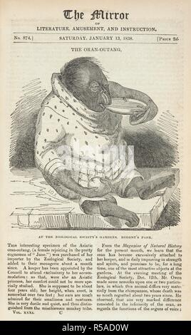 'The Oran-Outang. At the Zoological society's gardens. Regent's park. A female orang-utang given the name 'Jane'. The Mirror of Literature, Amusement and Instruction. London, January 13 1838. Source: P.P.5681 volume xxxi, opposite p.16. - Stock Photo