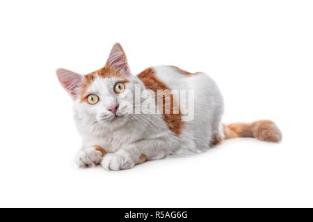 Cute tabby cat looking curious to the camera. Isolated on white background. - Stock Photo