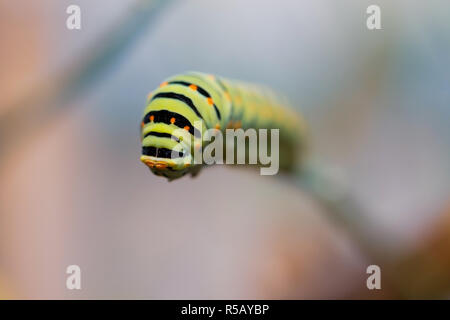 Caterpillar on twig, selective focus macro photograph with copy space - Stock Photo