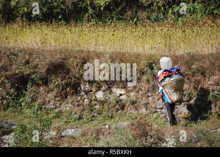 a Porter carrying a heavy load on a narrow path between fields in the mountains of Eastern Nepal - Stock Photo