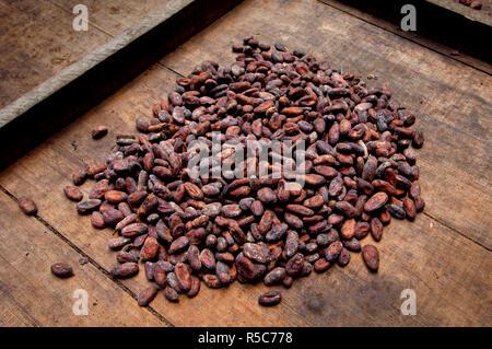 Costa Rica, La Virgen de Sarapiqui, Drying Cocoa Beans, Tirimbina Biological Reserve - Stock Photo