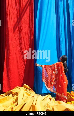 Woman in Saree checking freshly dyed fabric hanging from Bamboo poles to dry, Sari garment factory, Rajasthan, India, (MR/PR) - Stock Photo