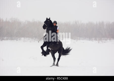 Friesian stallion running in winter field. Horse candles on a blurred background - Stock Photo