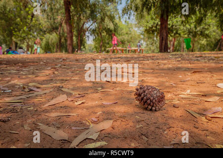 One dry brown pine cone lying on the ground among many dry leaves in the forest against blurred figures of people - Stock Photo