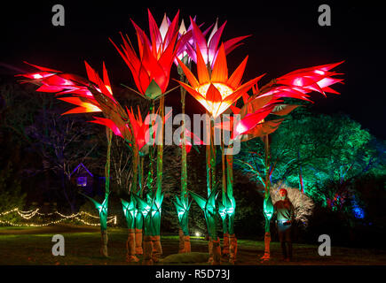 Wisley, Surrey, UK, 30 November 2018.  30th November 2018. Naomi Trenier, 31 from Surrey pictured admiring the display of flowers.  The daily light installations returns to Wisley from 1 December until Wednesday 2 January 2019 from 4pm - 8pm.  Back for its fourth year, Christmas Glow guides visitors around a new route for 2018, taking in locations including the Rock Garden, the Seven Acres lake and the Jellicoe Canal. Credit: Oliver Dixon/Alamy Live News - Stock Photo