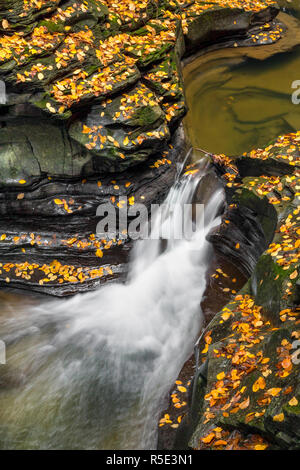 Whitewater splashes through rocky chutes with colorful fallen autumn leaves all around in Watkins Glen State Park, New York. - Stock Photo