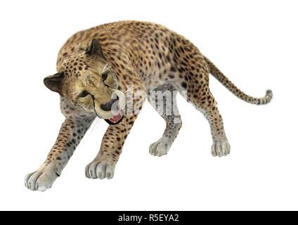 3D Rendering Cheetah on White - Stock Photo