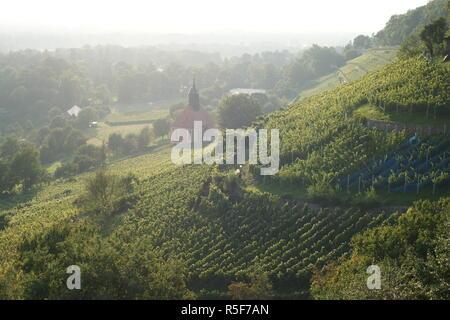 Vineyards Dresden Pillnitz, Germany, Saxony - Stock Photo