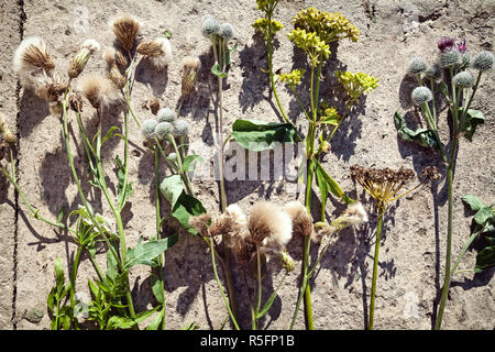 Various kinds of wild flowers on the ground arranged in a row. Several cut wildflowers floral background - Stock Photo