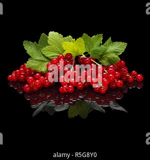 Red currant berries isolated on black - Stock Photo