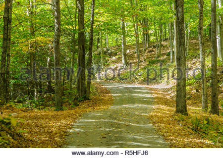 Narrow dirt road curving through the woods in western Massachusetts - Stock Photo