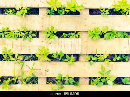 Go green concept image. green plants and wood - Stock Photo