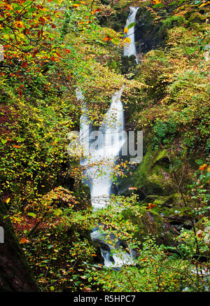 Stock Ghyll Force, shrouded by foliage early in autumn. A majestic waterfall near Ambleside, Lake District National Park