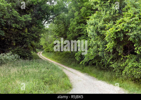 A two track gravel lane winds into the spring woods in rural southeastern Ohio. - Stock Photo