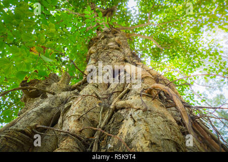 under gree tree canopy during autumn - Stock Photo