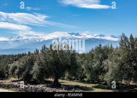 Mountain tops of the Sierra Nevada mountain range in Andalusia, Spain with lush olive groves in the foreground - Stock Photo