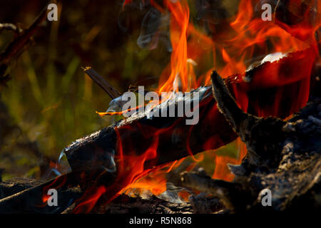 Burning firewood. Fire background with red flame - Stock Photo