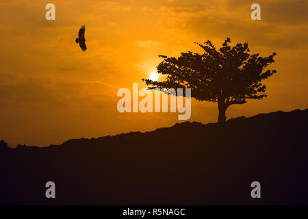 Silhouette eagle flying in the sky when sunrise with freedom and pride over beach almond tree on the mountain. - Stock Photo